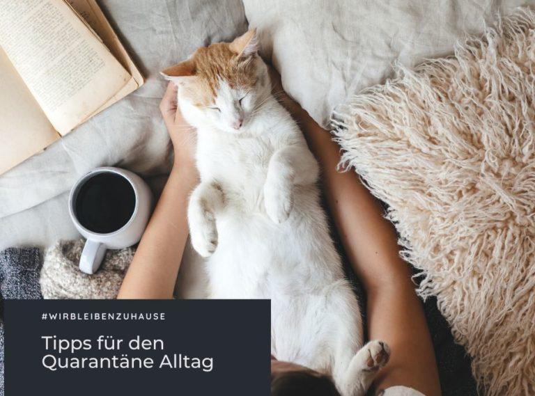 Katze auf Rücken liegend im Bett