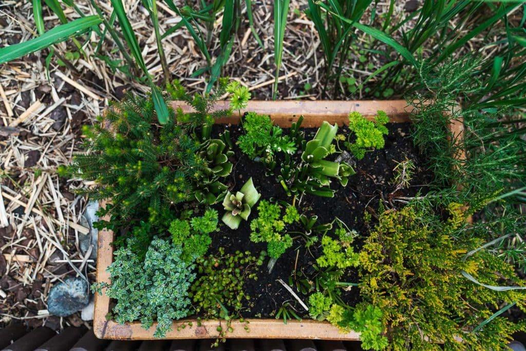 DIY Sommergarten Kraeuterbeet
