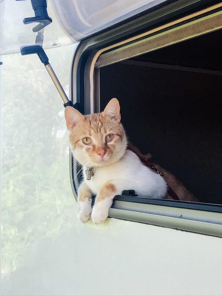 Camping mit Katze im Wohnmobil